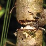 Problemas frequentes nos caules e ramos