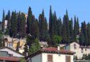 Cipreste Italiano – Cupressus sempervirens